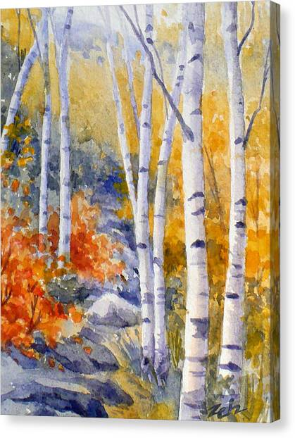 Birches Along The Trail Canvas Print