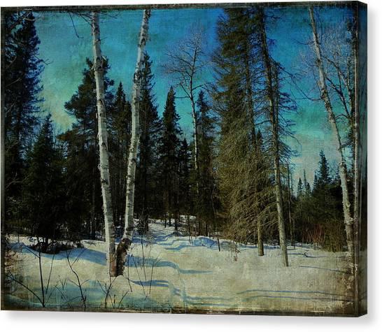Birches  Canvas Print by Dianne  Lacourciere