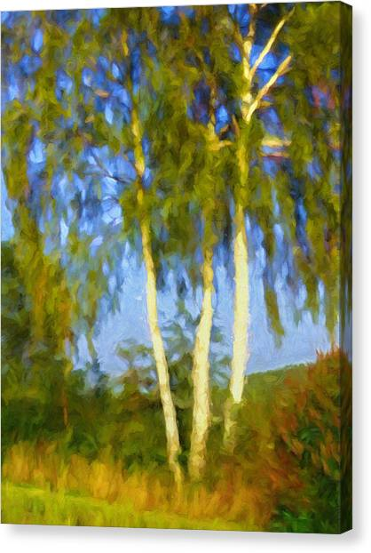 Canvas Print - Birches In Sunlight by Impressionist Art