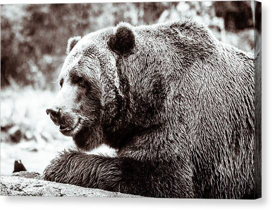 Bird And A Bear In Black And White Canvas Print