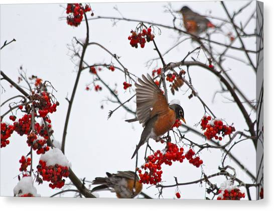 Bird And Berries Canvas Print