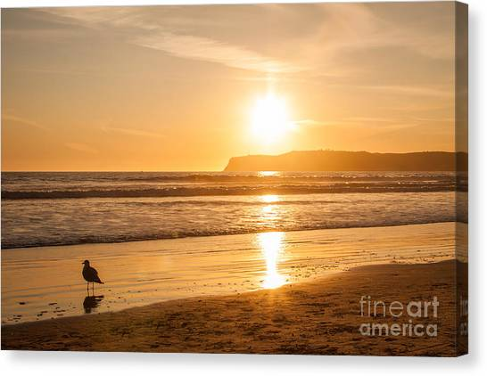 Bird And His Sunset Canvas Print