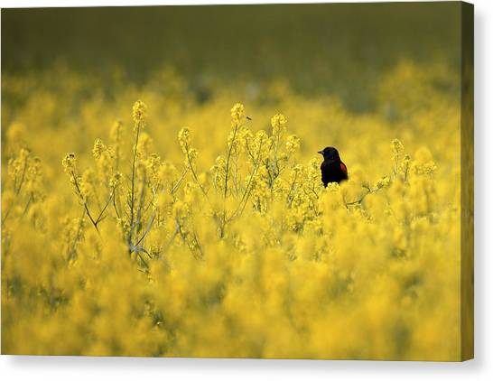 Bird And The Bees Mg_9150 Canvas Print
