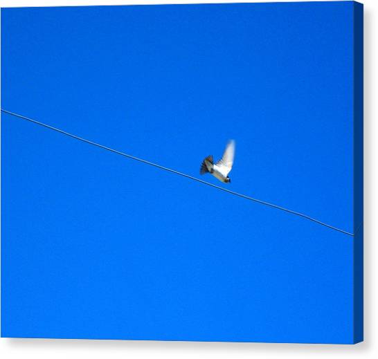 Bird And Wire Canvas Print