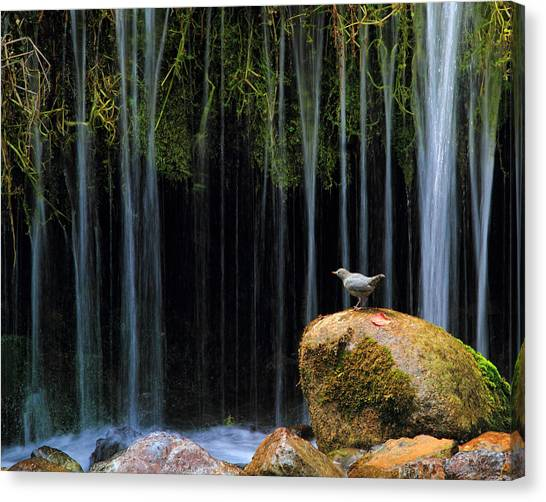 Bird Bath Canvas Print