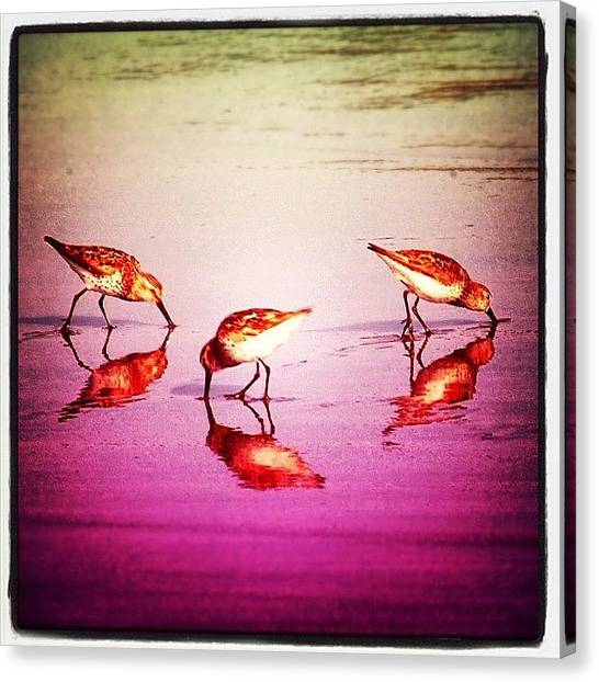 Ocean Sunsets Canvas Print - #bird #birds #beach #summer #sunset by Jill Battaglia