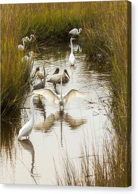 Bird Brunch 2 Canvas Print