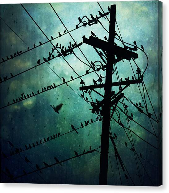 Bird City Canvas Print
