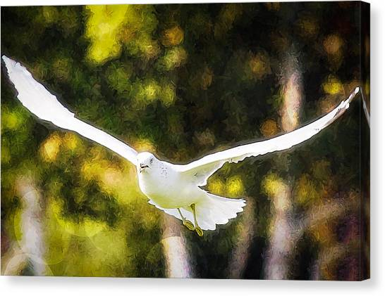 Bird Fly With Colors Canvas Print by Saibal Ghosh