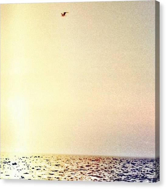 Saltwater Life Canvas Print - #bird #flying #high #over The #ocean - by Jessica Gullasch