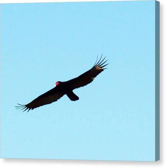 Bird In Flight Canvas Print by Van Ness
