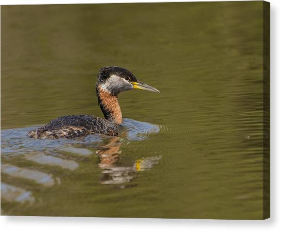 Brian Rock Canvas Print - Bird In Pond by Brian Rock
