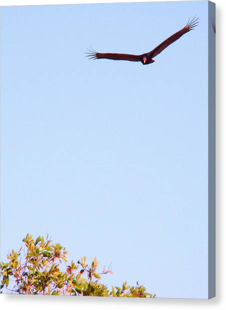 Bird In Pursuit Canvas Print by Van Ness