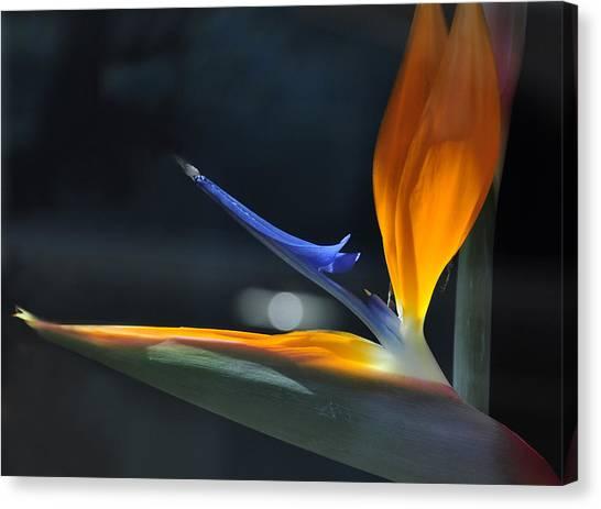 Bird In The Window Canvas Print