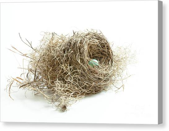 Bird Nest 1 Canvas Print