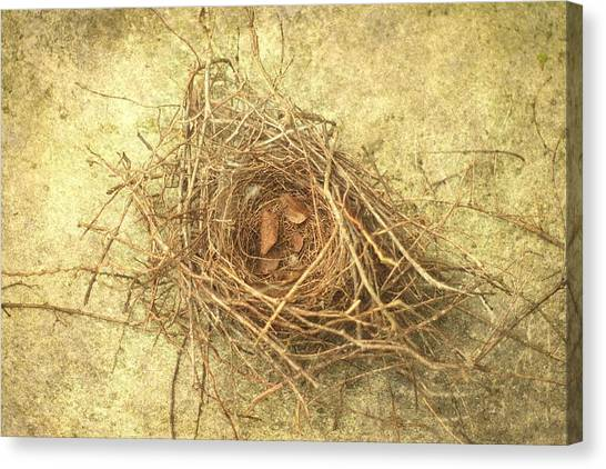 Bird Nest II Canvas Print