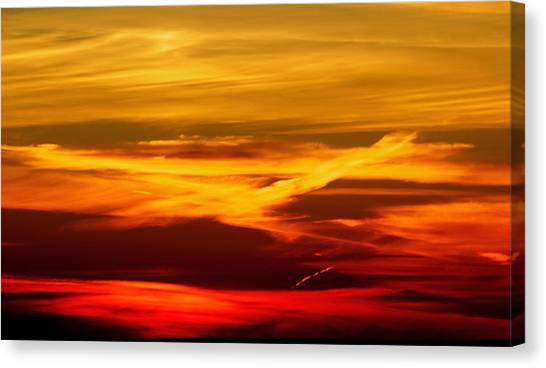 Bird Of Fire Canvas Print by Jocelyne Choquette