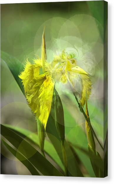Bird Of Iris Canvas Print