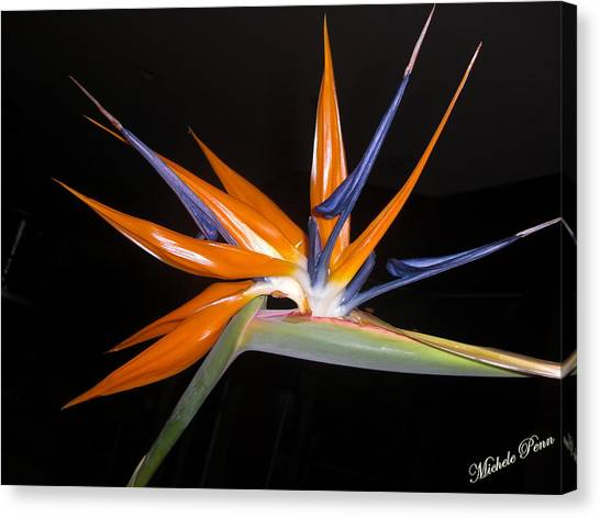 Bird Of Paradise Beauty 4 Canvas Print