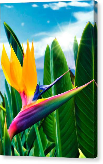 Bird Of Paradise 5 Canvas Print