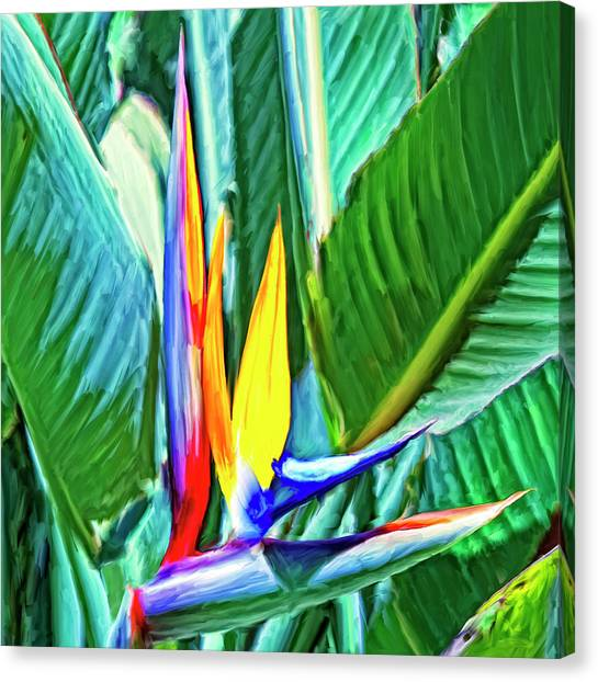 Mauna Loa Canvas Print - Bird Of Paradise by Dominic Piperata