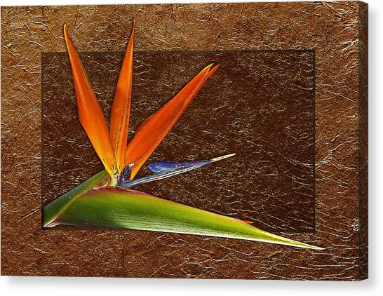 Bird Of Paradise Gold Leaf Canvas Print