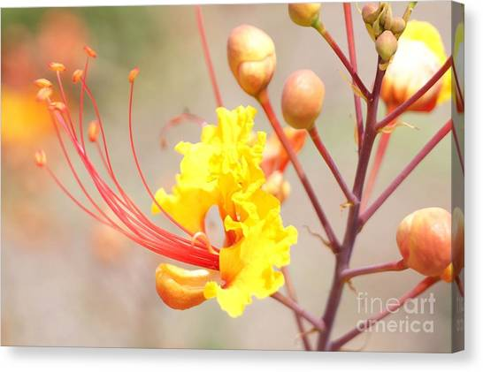 Bird Of Paradise Profile Canvas Print