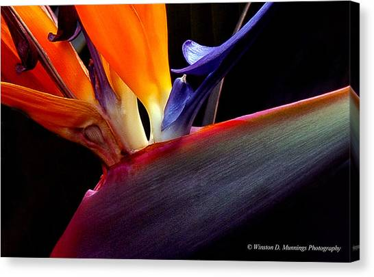 Bird Of Paradise - South African Native  Canvas Print