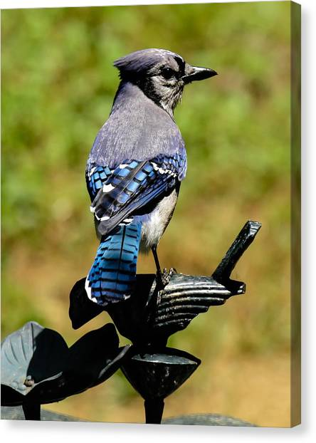 Bird On A Bird Canvas Print