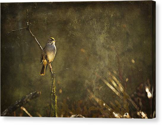 Brown Towhee Canvas Print - Bird On A Branch by Belinda Greb