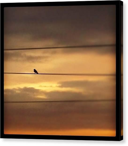 Law Enforcement Canvas Print - #bird On A #wire #sunset #montanita by Darren O' Dea