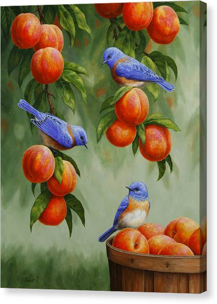 Fruit Baskets Canvas Print - Bird Painting - Bluebirds And Peaches by Crista Forest