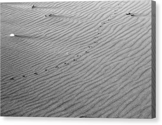 Bird Prints On Beach Canvas Print