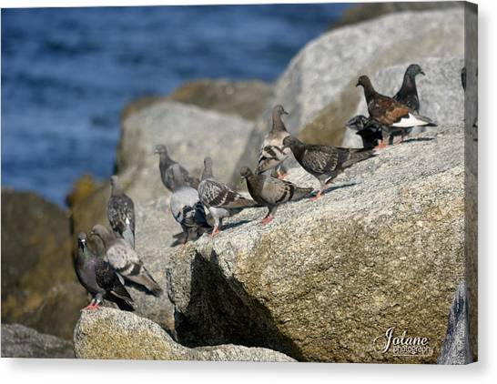 Bird Rock Beach Canvas Print