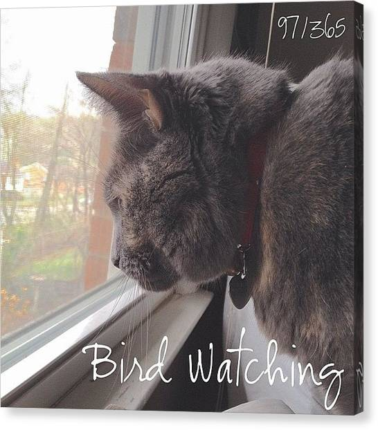Kittens Canvas Print - Bird Watching. Dixie Is Focused On A by Teresa Mucha