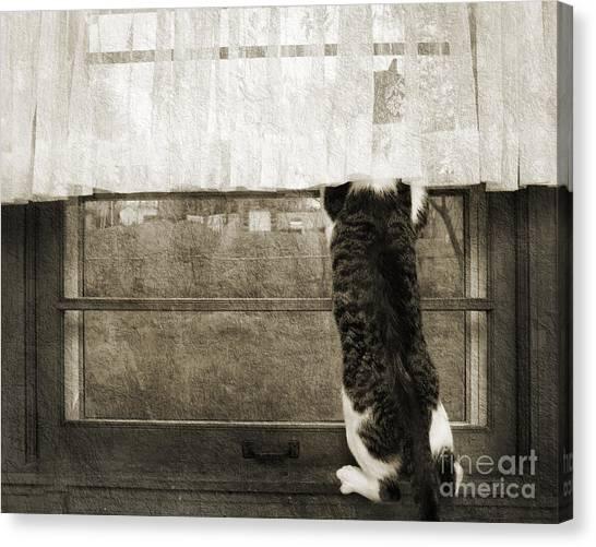 Andee Design Monochrome Canvas Print - Bird Watching Kitty Cat Bw by Andee Design