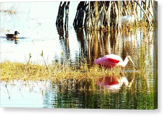 Bird Watching Canvas Print by Van Ness