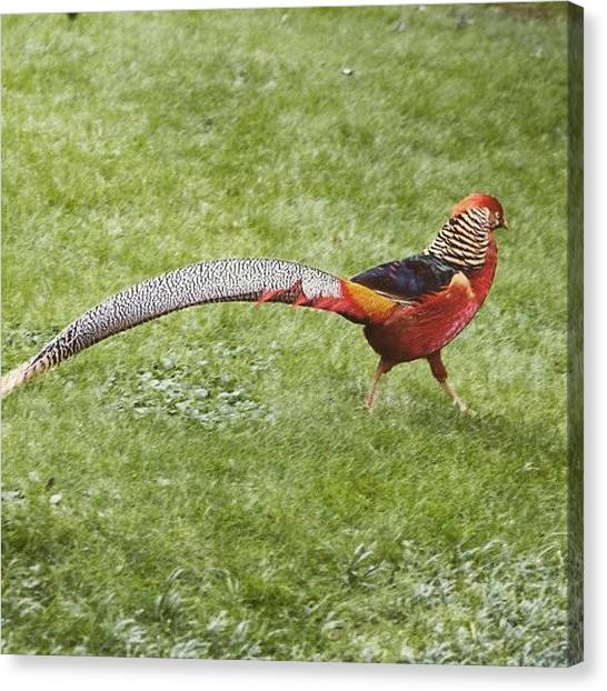 I Phone Canvas Print - Bird Italy @italy  Photograph: Gidon by Gidon Pico