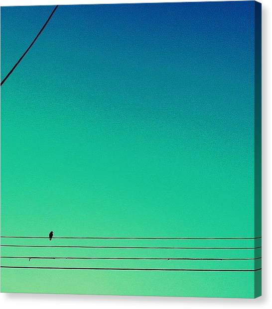 Minimalism Canvas Print - Bird On A Wire by Merideth Bray