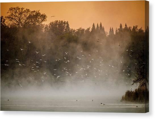 Birds And The Fog  Canvas Print