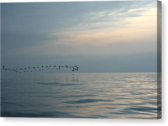 Birds At Sunset In Sister Bay Canvas Print