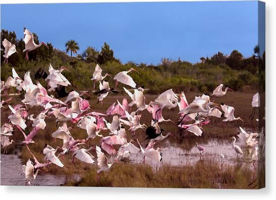 Birds Call To Flight Canvas Print