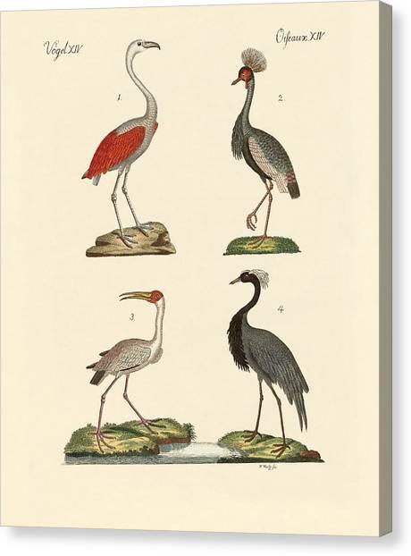 Demoiselles Canvas Print - Birds From Hot Countries by Splendid Art Prints