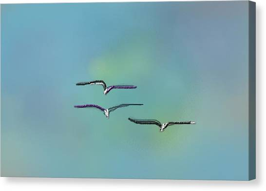 Birds In Flight Canvas Print by Greg Stew