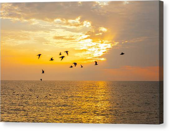 Canvas Print featuring the photograph Birds In Lake Erie Sunset by David Coblitz