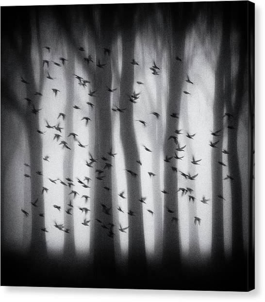 Mood Canvas Print - Birds by Jacqueline Van Bijnen