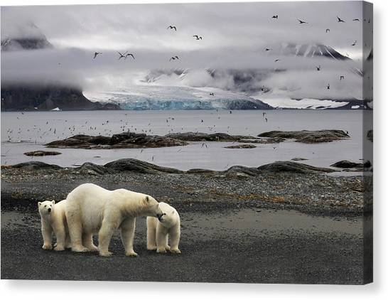 Polar Bears Canvas Print - Birds by Mathilde Collot