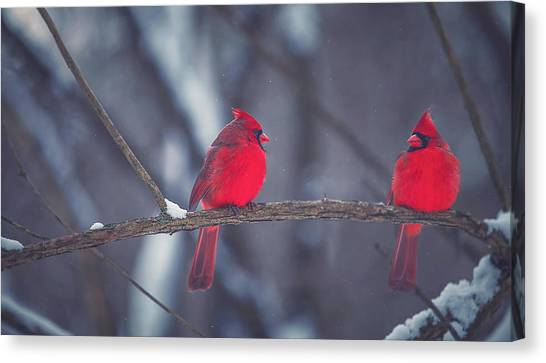 Cardinals Canvas Print - Birds Of A Feather by Carrie Ann Grippo-Pike