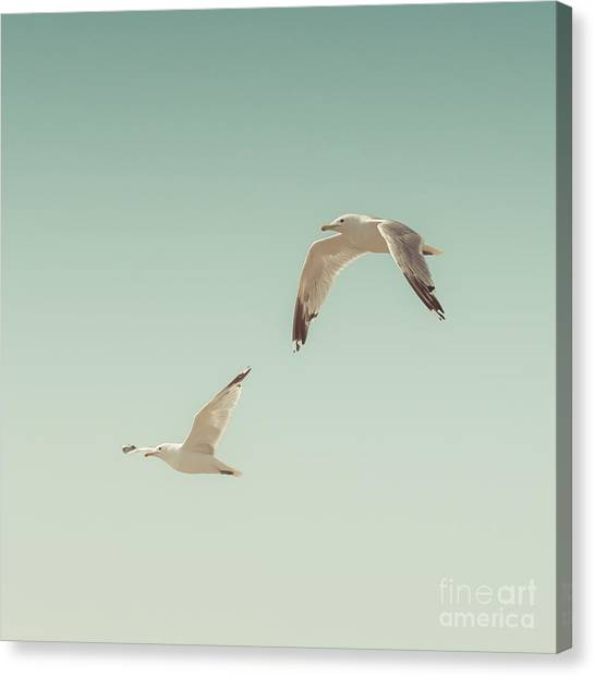 Seagulls Canvas Print - Birds Of A Feather by Lucid Mood