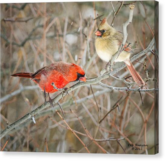 Canvas Print - Birds Of A Feather by Peg Runyan